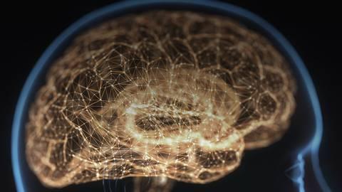 Understanding the Brain: An Exploration of an Extraordinary Organ