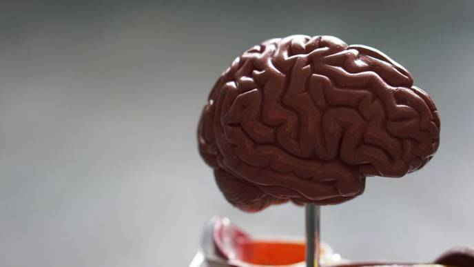 Trinity Researches Discover How the Brain 'Re-Wires' After Disease